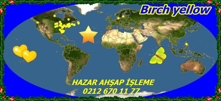 20mBırch yellow223
