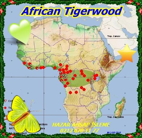 African Tigerwood88