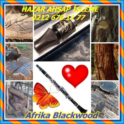 Afrika Blackwood12