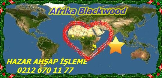 Afrika Blackwood123