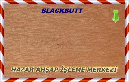 Blackbutt-Eng.-Dışbudak