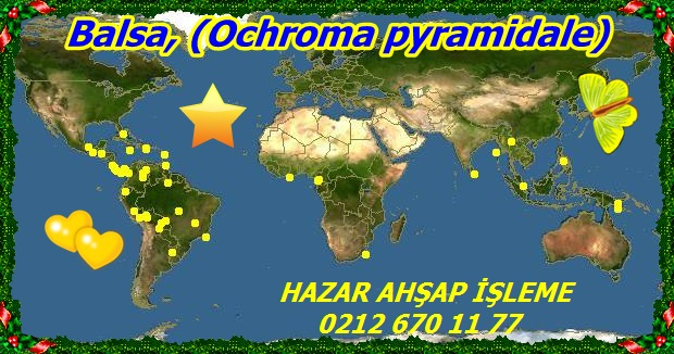 Ochroma_pyramidale