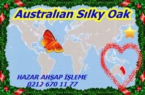 Silky-Australıan Sılky Oak 33