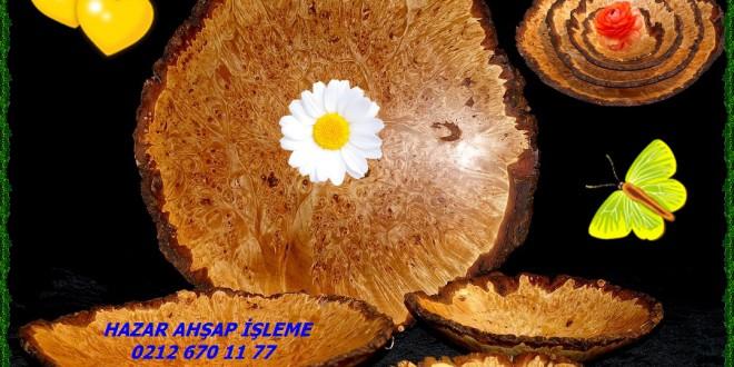 Akça Ağaç, Sycamore Maple, European Sycamore,Acer psedoplatanus