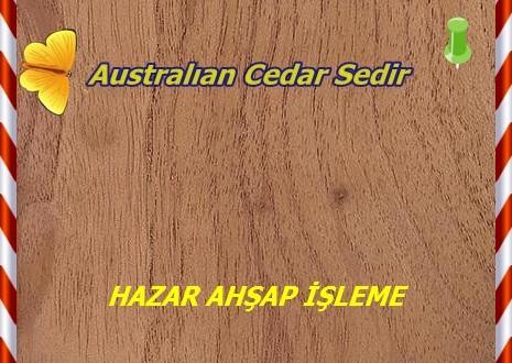 Australıan Cedar Sedir