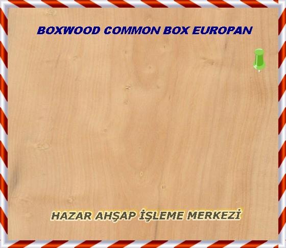Şimşir (şimşiri) Aşağıda Daha Görüntüleri Ortak Ad (lar): Şimşir, Ortak Kasası, Avrupa Kutusu Bilimsel Adı: şimşiri Dağıtım: Avrupa, kuzeybatı Afrika ve güneybatı Asya Ağaç Boyutu: (12-20 cm) gövde çapı uzun boylu 10-25 ft (3-8 m), 4-6 Ortalama Kuru Ağırlık: 61 £ / ft 3 (975 kg / m 3 ) Özgül Ağırlık (Temel,% 12 MC): 0,68, 0,98 Janka Sertlik: 2840 £ f (12.610 N) Yırtılma Modülü: 20.960 £ f / içinde 2 (144,5 MPa) Elastik Modülü: £ 2.494.000 f / içinde 2 (17.20 GPa) Kırma Gücü: 9950 £ f / içinde 2 (68.6 MPa) Büzülme: Radyal:% 5.0, Teğet: 9.0%, Volumetrik: 14.0%, T / R Oranı: 1.8 Renk / Görünüm: Renk ışığa uzun süre maruz kalma ile hafifçe karartmak eğilimi sarı bir ışık krem, olma eğilimindedir. Özodunu farklı değil Diri. Tahıl / Doku: Şimşir ceza, doğal bir parlaklık bile dokuya sahiptir. Tahıl, düz ya da hafif düzensiz olma eğilimindedir. Endgrain: Yaygın-gözenekli; küçük gözenekler, çok sayıda, sadece yalnız; latewood gözenek sıklığı ve renk değişim azalması nedeniyle belirgin büyüme halkaları; görünmez parankima; dar ışınları normal aralık. Rot Direnç: Bu mantar saldırısı nedeniyle koyu çizgiler lekeli olabilir ama cebire, dayanıklı olarak değerlendirilmiştir. Böcek saldırı Bazen duyarlı. İşlenebilirlik: Şimşir açılması için en iyi uyumluluğu düz rağmen boyutları çalışmak biraz güç olma eğilimindedir. Koparma planya ve diğer işleme operasyonları sırasında düzensiz tahıl ile parçalar üzerinde oluşabilir. Şimşir kesiciler üzerinde hafif bir köreltme bir etkiye sahiptir. Koku: karakteristik bir koku. Alerjiler / Toksisite: Şiddetli reaksiyonlar oldukça nadir olmasına rağmen, Şimşir bir olarak bildirilmektedir Duyarlanmaya . Genellikle en yaygın tepkiler sadece göz, cilt ve solunum tahriş içerir. Makaleleri görmek Ahşap Alerji ve Toksisite ve Ahşap Toz Emniyet fazla bilgi için. Fiyatlandırma / Durumu: Küçük miktarlarda ve boyutlarda Genellikle sadece, Şimşir çok pahalı olma eğilimindedir. Sürdürülebilirlik: Ekler veya Tehdit Altındaki Türlerin IUCN Kırmızı Listesi CITE