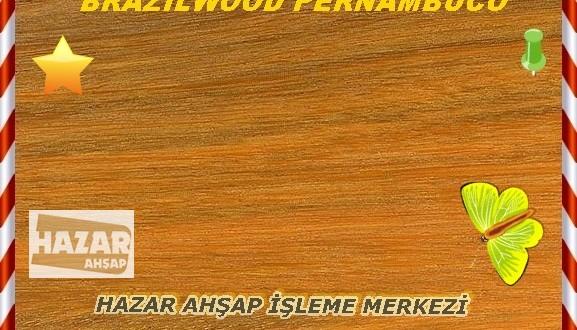 brazilwood-kızılağaç-1