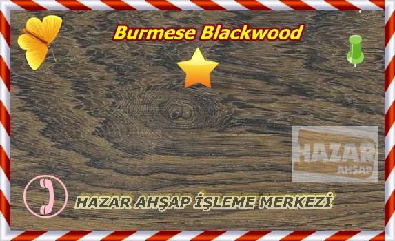 burmese-blackwood1