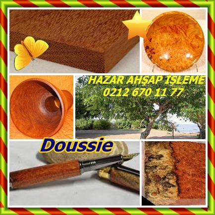 cats Doussie 555