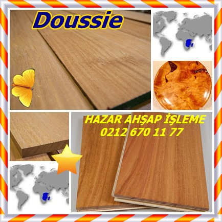 cats Doussie 7856