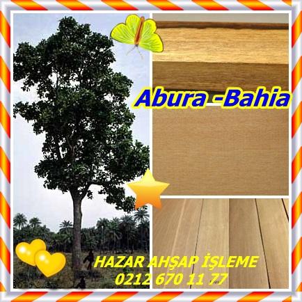 catsAbura -Bahia12