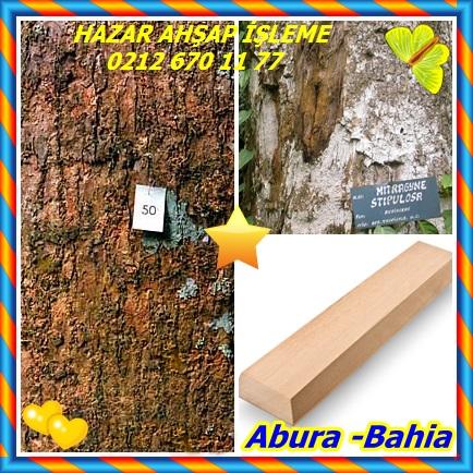 catsAbura -Bahia334