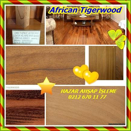 catsAfrican Tigerwood22