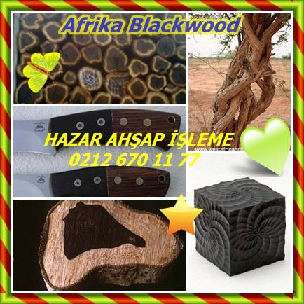 catsAfrika Blackwood1