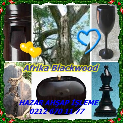 catsAfrika Blackwood333