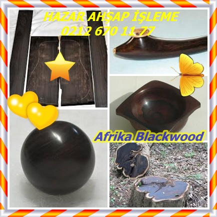 catsAfrika Blackwood456