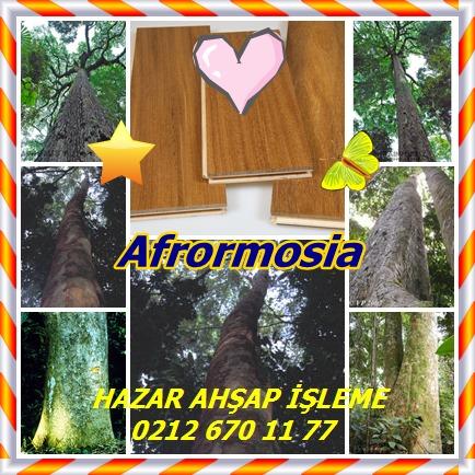 catsAfrormosia312