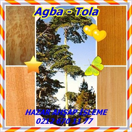 catsAgba - Tola66