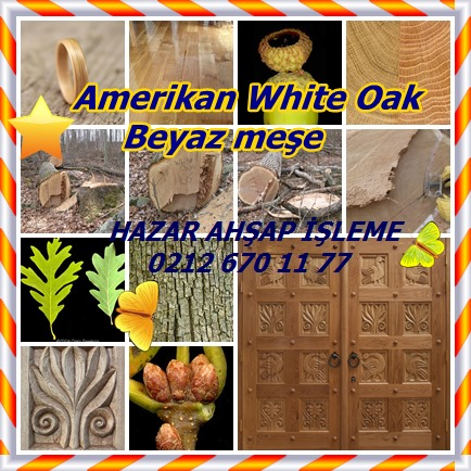 catsAmerikan White Oak ,Beyaz meşe