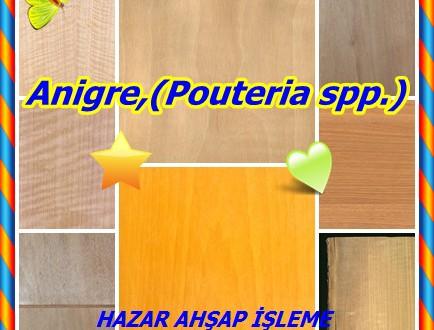 Anigre,(Pouteria spp.),Anegre, Aniegre, Aningeria, Aningré blanc, Aniegre blanc