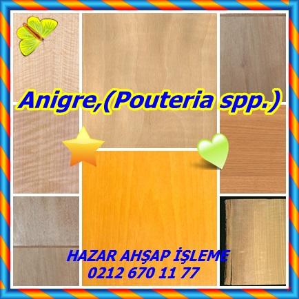 catsAnigre,(Pouteria spp.)098