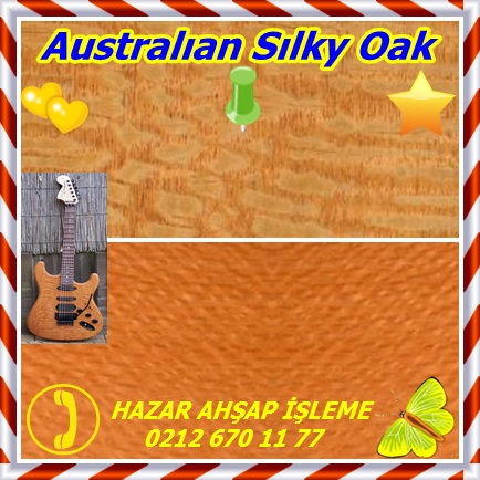 catsAustralıan Sılky Oak 12
