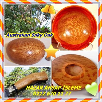 catsAustralıan Sılky Oak 22