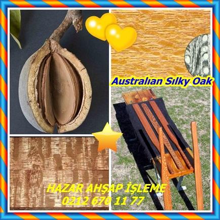 catsAustralıan Sılky Oak 43