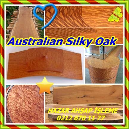 catsAustralıan Sılky Oak 4321