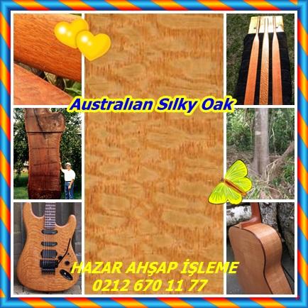 catsAustralıan Sılky Oak 5454