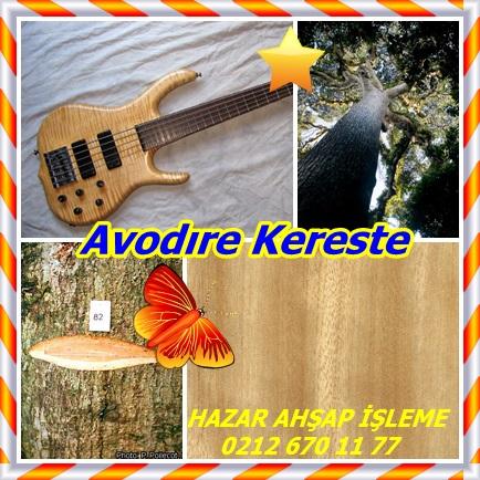 catsAvodıre Kereste7