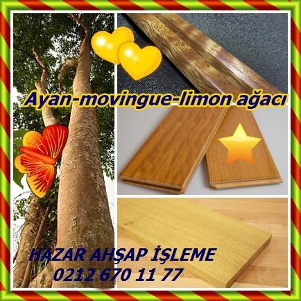 catsAyan-movingue-limon ağacı