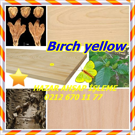 catsBırch yellow223