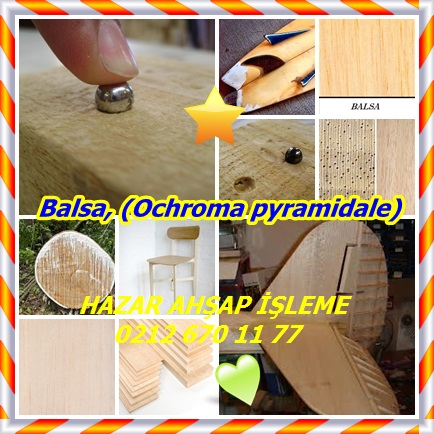 catsBalsa, (Ochroma pyramidale)11