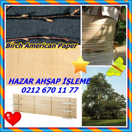 catsBirch American Paper78
