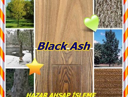 Ash American,Black Ash -Dışbudak,(Fraxinus nigra),swamp ash, basket ash, brown ash, hoop ash, and water ash,siyah kül,bataklık kül,Su kül, Schwarz-Esche,  svartask