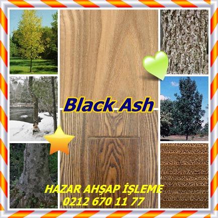 catsBlack Ash45