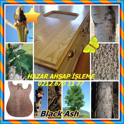 catsBlack Ash745