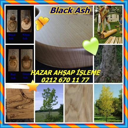 catsBlack Ash856