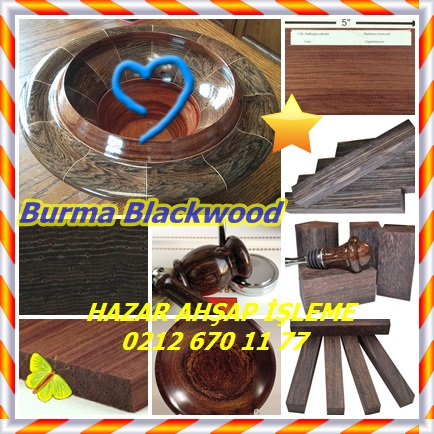 catsBurma Blackwood2