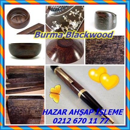 catsBurma Blackwood3