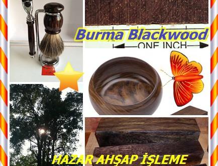 Burmese Blackwood,(Dalbergia cultrata),Khamphi Gülağacı,Laos Gülağacı,Indian Cocobolo,Yindaik, Zaunyi