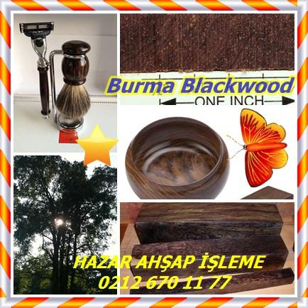 catsBurma Blackwood4