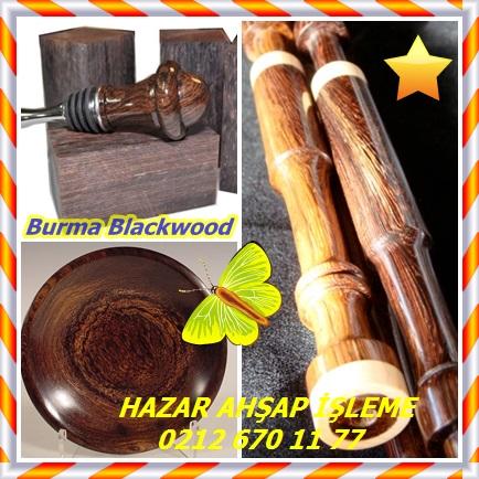 catsBurma Blackwood7