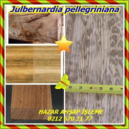 catsJulbernardia pellegriniana00