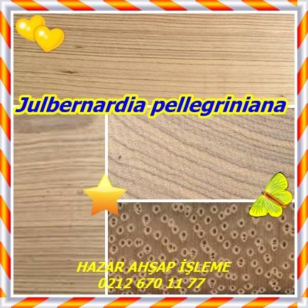 catsJulbernardia pellegriniana334