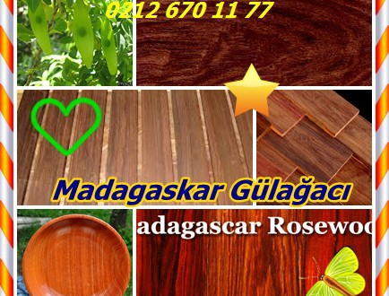 Madagascar Rosewood,(Dalbergia baronii),Palissandre de Madagascar Voamboana, Palissandre brun, Palissandre allık des marais