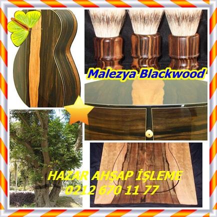 catsMalezya Blackwood1