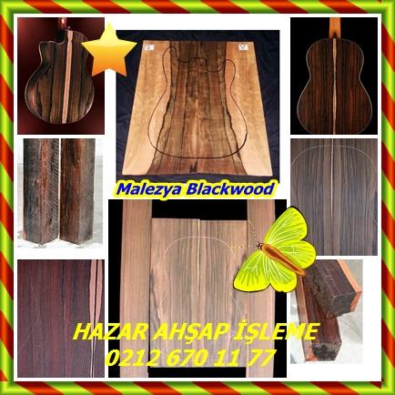 catsMalezya Blackwood2
