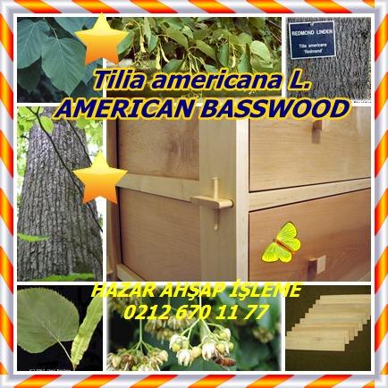 catsTilia americana L.12